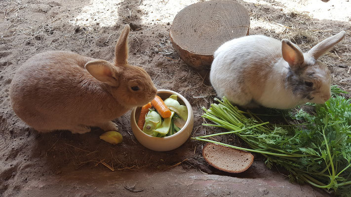 Unsere Kaninchen Max & Paula