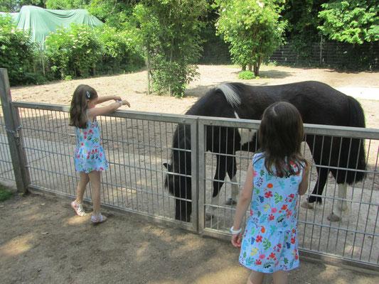 Unsere Mädels bei den Pferden in der Fasanerie Groß Gerau