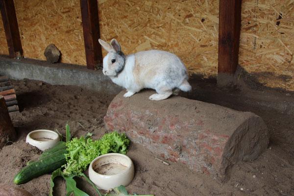 Unser Kaninchen Max sitzt auf einem Baumstamm und beschaut das Fressen