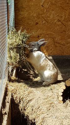 Kaninchen Max in ihrem selbstgebauten Stall