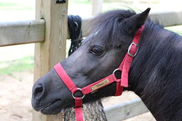 Unser Pony Nina im CenterParc Erperheide