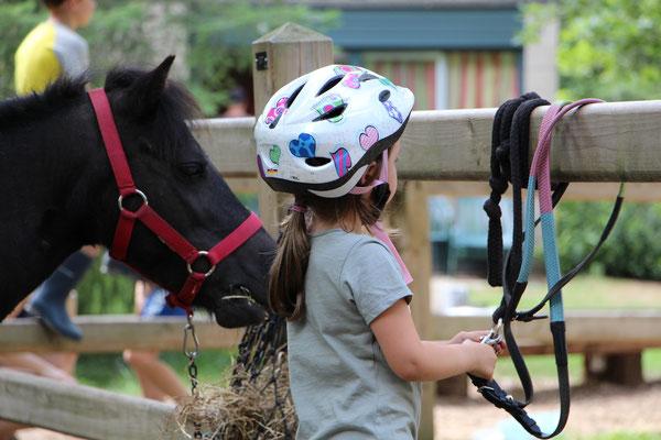 Unsere Kleine holt die Zügel für unser Pony Nina im CenterParc Erperheide