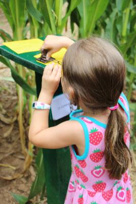 Unsere Kleine stempelt im Maislabyrinth auf dem Erdbeerhof Münch in Groß-Umstadt