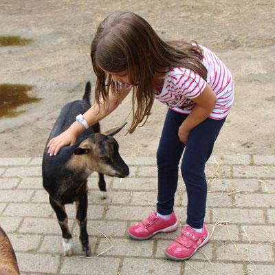 Unsere Kleine bei den Ziegen im Streichelzoo Centerparc Erperheide