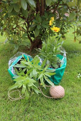 Blumen, die noch gepflanzt werden wollen