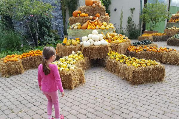 Kürbis-Welt beim Bauern Lipp in Weiterstadt
