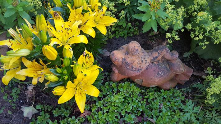 gelbe Lilien mit Deko-Frosch