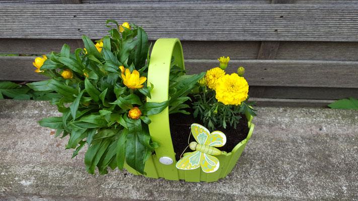 ein fertig bepflanztes Blumenkörbchen