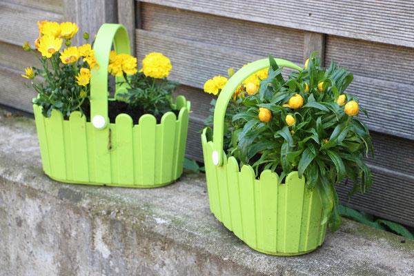 Henkelkörbchen bepflanzt mit Studenten- und Strohblumen