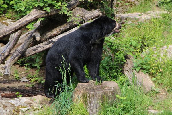 Das Ukumari-Land im Frankfurter Zoo mit Brillenbären und Brüllaffen