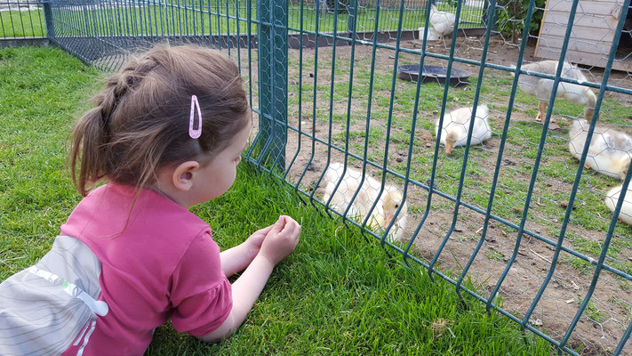 Unser Kleine beobachtet die Gänse beim Bauern Lipp
