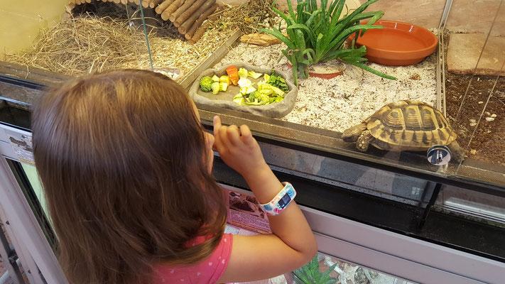 Unsere Kleine hat Freundschaft mit einer Schildkröte im Dehner-Gartencenter geschlossen