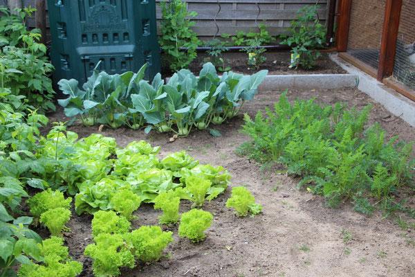 Blick in den Gemüsegarten mit Salat, Kohlrabi, Möhren, Erbsten und Tomaten