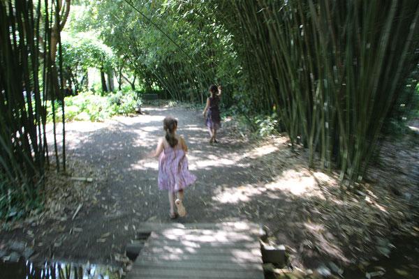 """Unsere Mädels auf dem Weg zu einem Bambus""""feld"""" im Palmengarten Frankfurt"""