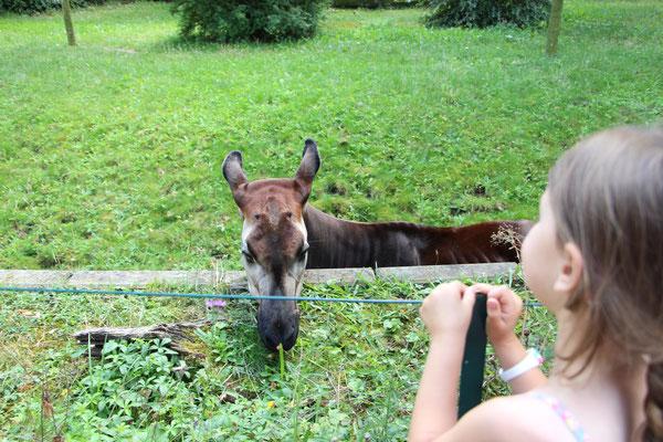 Unsere Kleine dem Okapi ganz nah - im Zoo Frankfurt