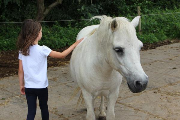 Unsere Große streichelt ein Pony auf der Weide im Centerparc Erperheide