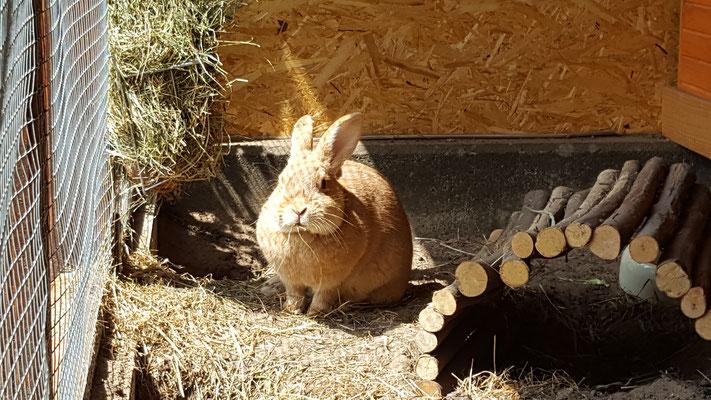 Unser Kaninchen Paula in ihrem selbstgebauten Stall