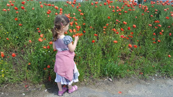 unsere Kleine betrachten ein Mohnfeld