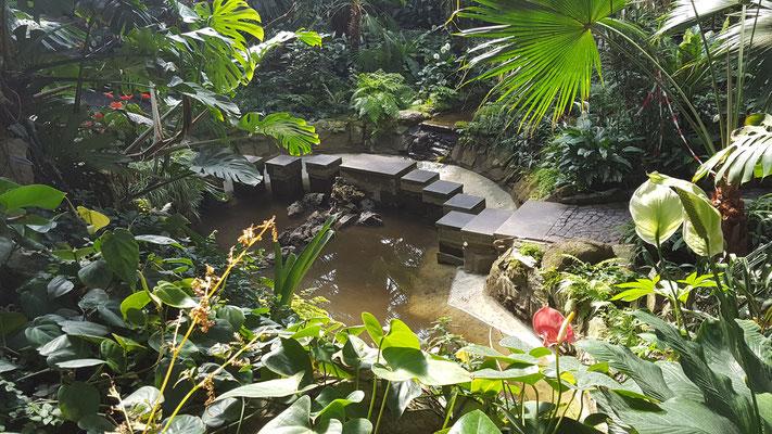 Ein Teich im Palmenhaus im Palmengarten Frankfurt
