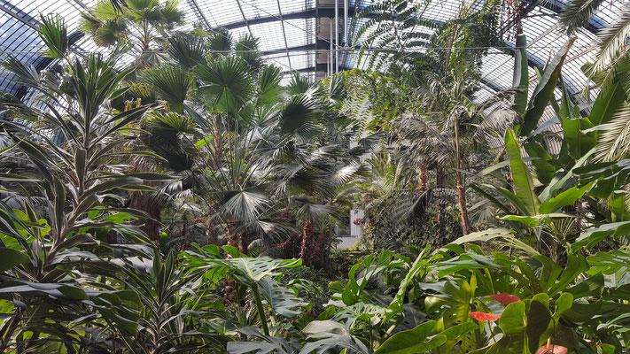 Im Palmenhaus im Palmengarten Frankfurt