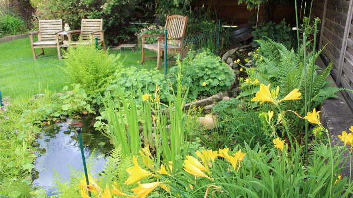 Unser Gartenteich mit Fraumantel, Trollblumen, Lilien, Farn und Funkie