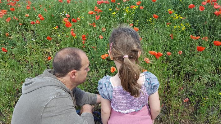 Stefan und unsere Kleine betrachten ein Mohnfeld