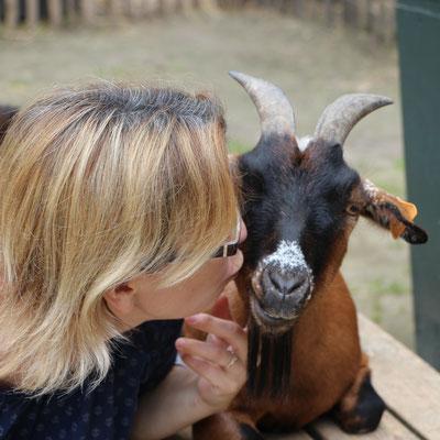 Ich gebe einer Ziege einen Knutscher im Streichelzoo Centerparc Erperheide