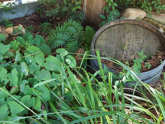 Hochbeet mit Schatten- und Waldpflanzen und altem Weinfass