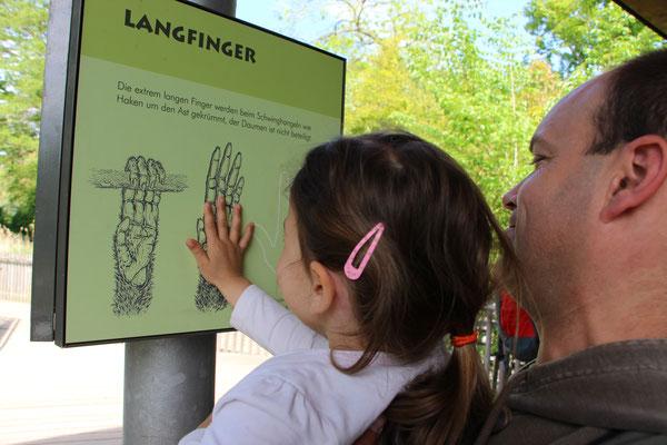 Die Kleine und der Papa messen ihre Hände im Vergleich zu Affenhänden im Frankfurter Zoo