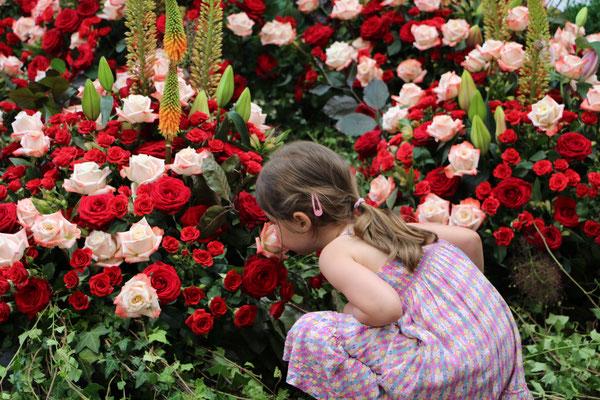 Unsere Kleine schnuppert an roten Rosen im Palmengarten Frankfurt