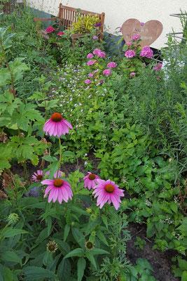 Der Sonnenhut in unserem Vorgarten