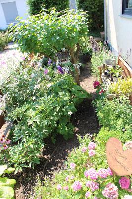 Blick in unseren Vorgarten mit Sonnenhut, Funkie, Rittersporn, Clematis und Hortensie