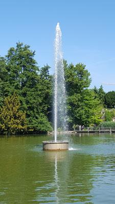 Der Springbrunnen im Bootsweiher im Palmengarten Frankfurt