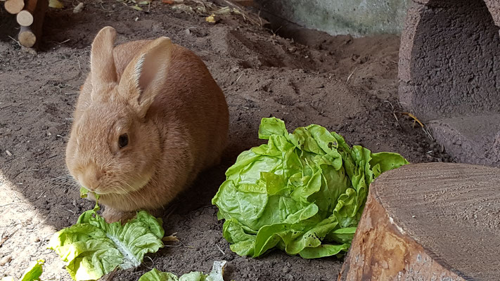 Kaninchen Paula in ihrem selbstgebauten Stall