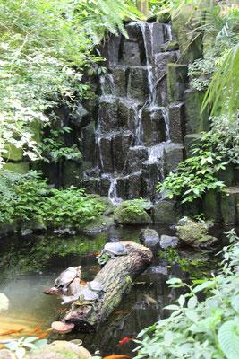 Ein Wasserfall mit Schildkröten im Tropicarium im Palmengarten Frankfurt
