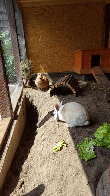 Unsere Kaninchen Max und Paula in ihrem selbstgebauten Stall