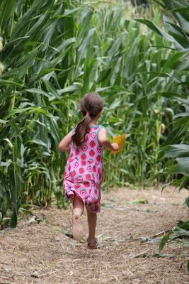 Unsere Kleine im Maislabyrinth auf dem Erdbeerhof Münch in Groß-Umstadt