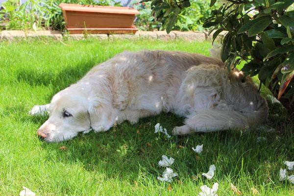Unser Hund Balou genießt den Schatten