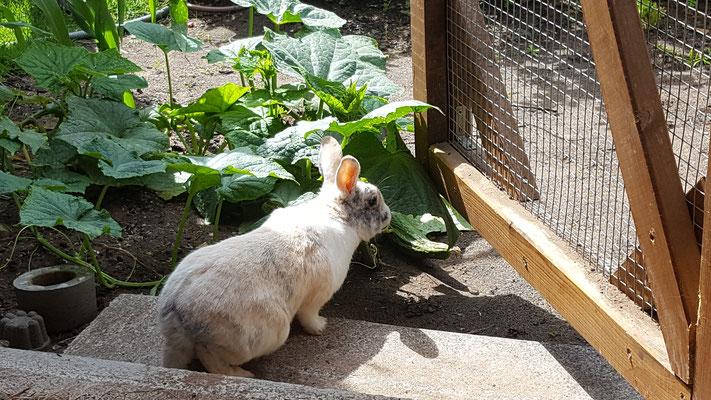 Unser Kaninchen Max geht auf Entdeckungstour