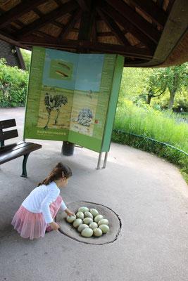 Die Kleine betrachtet eine nachgebautes Nest mit Straußeneiern im Frankfurter Zoo