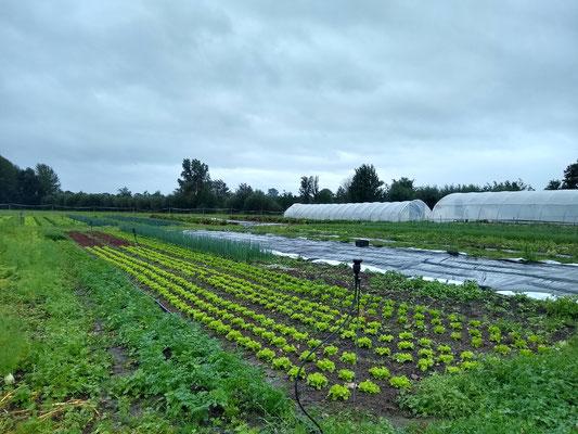 Gemüseacker auf Hof Dannwisch