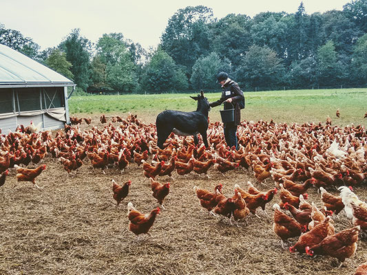Hühner und Esel füttern auf Hof Dannwisch
