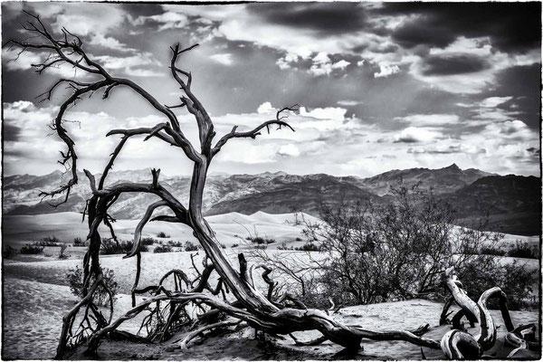 Bild 7 - Toter Baum