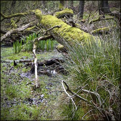 Bild 11 - Urwald