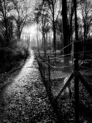 Bild 2 - Waldweg