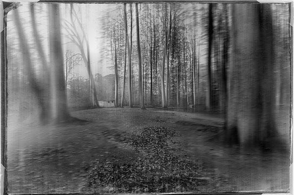 Bild 8: Waldblick
