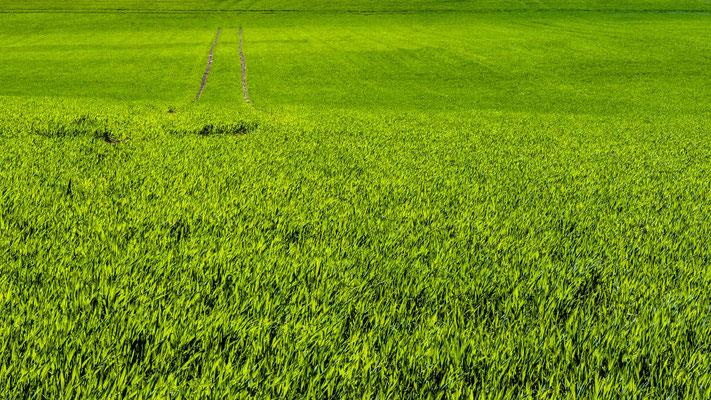 Bild 5 - Grün