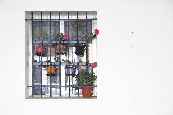 Bild 3 - Blumentopffenster