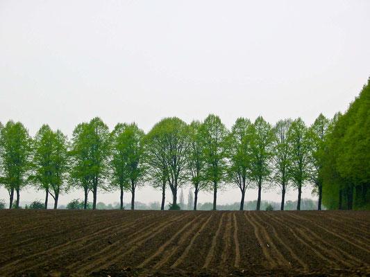 Bild 2 - Bäume senkrecht