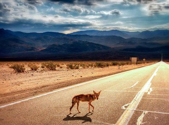 Bild 7 - Roadrunner